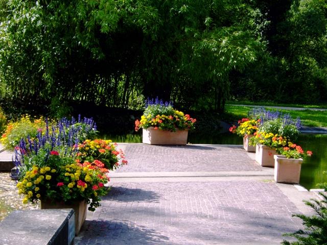 Kurpark Teich Blumen